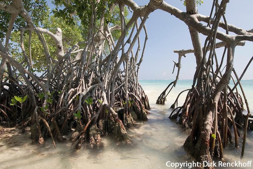 Mangroven im Punta Cana Beach Resort und Club, Dominikanische Republik