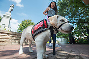 Soldier On Service Dogs