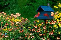 Dinner time at the blue bird house waiting room only: cardinals, goldfinch, mountain bluebird, chickadee, sparrow, swallowtail butterfly, bird, bird feeder, many birds