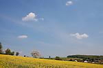Europa, DEU, Deutschland, Hessen, Odenwald, Odenwaldkreis, Michelstadt, Agrarlandschaft, Fruehling. Raps, Rapsbluete, Kategorien und Themen, Natur, Umwelt, Landschaft, Jahreszeiten, Stimmungen, Landschaftsfotografie, Landschaften, Landschaftsphoto, Landschaftsphotographie, Wetter, Wetterelemente, Wetterlage, Wetterkunde, Witterung, Witterungsbedingungen, Wettererscheinungen, Meteorologie, Wettervorhersage....[Fuer die Nutzung gelten die jeweils gueltigen Allgemeinen Liefer-und Geschaeftsbedingungen. Nutzung nur gegen Verwendungsmeldung und Nachweis. Download der AGB unter http://www.image-box.com oder werden auf Anfrage zugesendet. Freigabe ist vorher erforderlich. Jede Nutzung des Fotos ist honorarpflichtig gemaess derzeit gueltiger MFM Liste - Kontakt, Uwe Schmid-Fotografie, Duisburg, Tel. (+49).2065.677997, ..archiv@image-box.com, www.image-box.com]