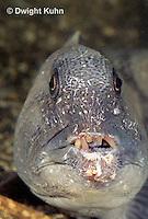 TP07-001z  Wolf Fish - Anarhichas lupus