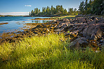 Cobscook Bay State Park, Downeast ME