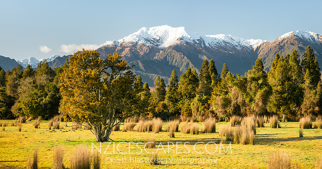 Morning on farmland in Whataroa with Mt. Adams of Southern Alps in background, West Coast, South Westland, New Zealand, NZ