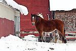 Horses in Randolph, VT, USA