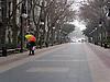 Pair under a colorful umbrella on the empty Paseo Borne in Palma<br /> <br /> Pareja debajo de un paraguas de colores en el Paseo Born en Palma<br /> <br /> Paar unter buntem Regenschirm auf dem sonst leeren Paseo Borne in Palma<br /> <br /> 2272x 1704 px<br /> 150 dpi: 38,47 x 28,85 cm<br /> 300 dpi: 19,24 x 14,43 cm
