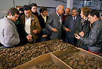 Truffling in Cahors France. Jacques Pedeyre Frances largest truffle dealer and exporter. (in suit centre) Cahors France. Group of chefs from the UK visit factory warehouse  1990s. Different grades of Truffles.