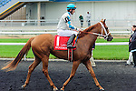 Bourbon's Rahfee(1) with Jockey Steven Ronald Bahen aboard after the Natalma Stakes at Woodbine Race Course in Toronto, Canada on September 13, 2014 with Jockey Patrick Husbands aboard.