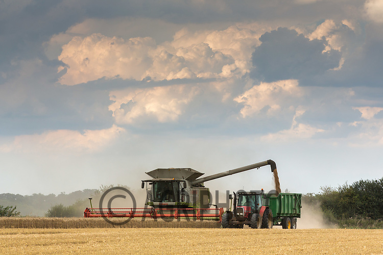 Harvesting Winter Wheat in Rutland<br /> Picture Tim Scrivener 07850 303986<br /> ….Covering agriculture in the UK….