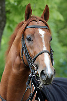 15th May 2020, Muenchen-Riem racecourse, Munich, Germany. Flat racing;  Wahiba Sands in Portrait.