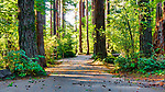 Forested campgound road in Belfair State Park, on Hood Canal, Belfair, Washington