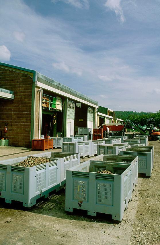 Les noix sont ramassées et traitées par lot.Station exprimentale de Creysse.Noix du Périgord.46-Lot.France
