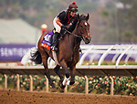 DEL MAR, CA - OCTOBER 28:   War Flag, owned by Joseph Allen, LLC and trained by Claude R. McGaughey III, exercises in preparation for Breeders' Cup Filly & Mare Turfat Del Mar Thoroughbred Club on October 28, 2017 in Del Mar, California. (Photo by Alex Evers/Eclipse Sportswire/Breeders Cup)