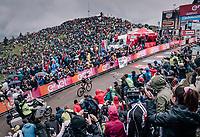Maglia Rosa Simon Yates (GBR/Mitchelton-Scott) finishing up the infamous Monte Zoncolan (1735m/11%/10km) in 2nd place and putting even more time into his biggest rivals<br /> <br /> stage 14 San Vito al Tagliamento – Monte Zoncolan (186 km)<br /> 101th Giro d'Italia 2018