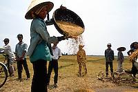 Worfeln von Reis bei Nha Trang, Vietnam
