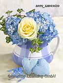Alfredo, FLOWERS, BLUMEN, FLORES, photos+++++,BRTOLMN49630,#f#, EVERYDAY