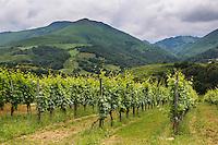France, Pyrénées-Atlantiques (64), Pays-Basque,  Irouléguy, Le vignoble d'Irouleguy  AOP// France, Pyrenees Atlantiques, Basque Country,