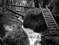 Steep Ravine Trail
