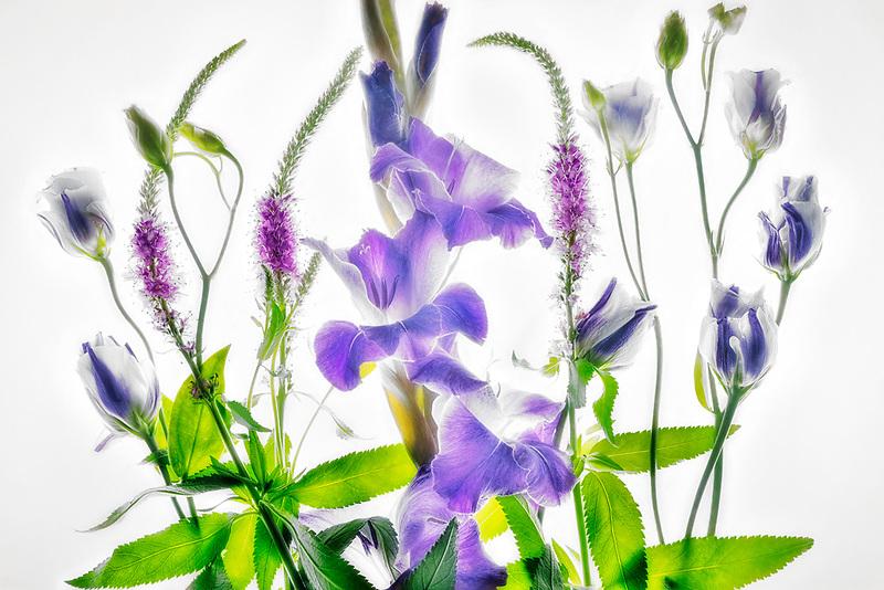 Purple Black Velvet Gladio;us in arrangement. Oregon