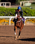 OCT 26: Breeders' Cup Dirt Mile entrant Blue Chipper, trained by Kim Young Kwan, gallops at Santa Anita Park in Arcadia, California on Oct 26, 2019. Evers/Eclipse Sportswire/Breeders' Cup