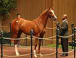 13 September 2010.  Hip #169 A.P. Indy - Madcap Escapade filly sold for $900,000 at the Keeneland September Yearling Sale.  Consigned by Hill n'Dale.