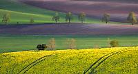 Dream  Land<br /> Landscape near town of Jihomoravský at afternoon light, Moravia, Czech Republic.