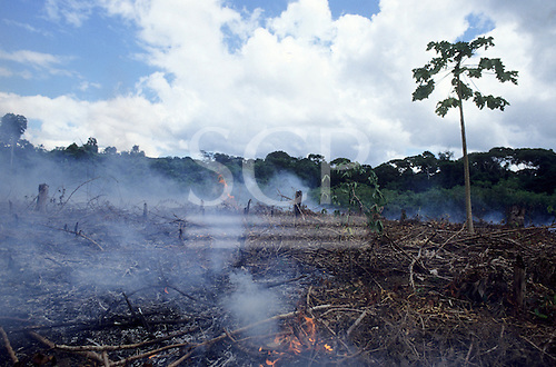 Amazon, Brazil. Burning of rainforest to clear land for agriculture or cattle ranching. Para State.