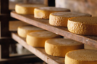 Europe/France/Nord-Pas-de-Calais/59/Nord/Oxelaere: Fromages de Bergues dans la cave d'affinage de la ferme Degraeve