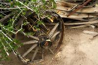 Close up of old wagon wheel. Morten Botanical Garden. Palm Springs, California