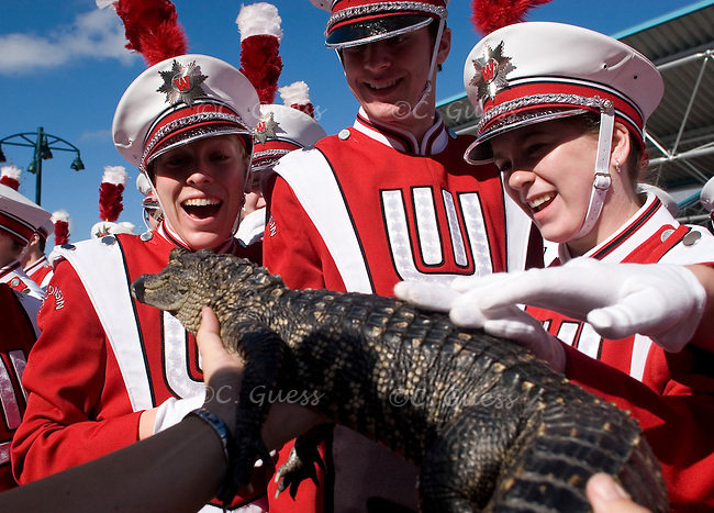 Three members of the Wisconsin Band react to having an alligator thrown in their face by an employee of Gatorland, the ?gator capital of the world,? while waiting for their turn to march in the Citrus Parade in Orlando, FL.