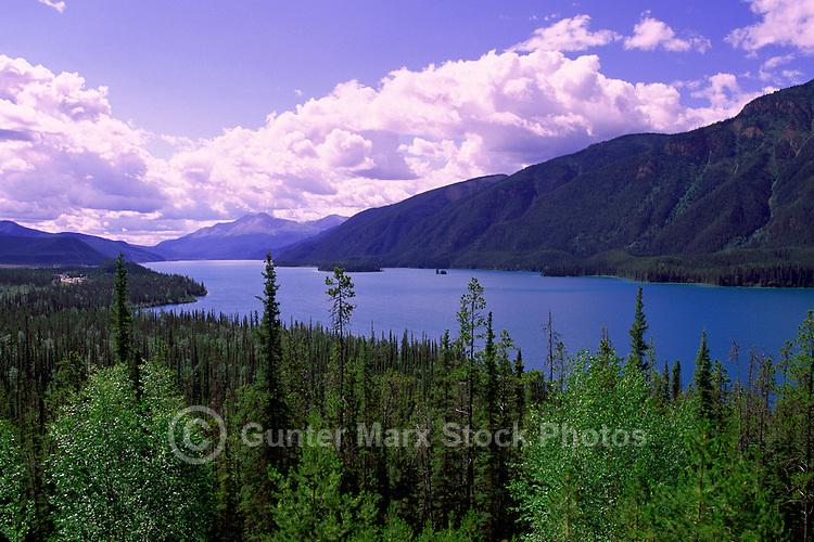 Boreal Forest at Muncho Lake, Muncho Lake Provincial Park, Canadian Northern Rockies, Northern BC, British Columbia, Canada, Summer
