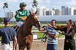 HALLANDALE BEACH, FL - MARCH 04:  Timeline (KY) #11 wth jockey Javier Castellano on board, breaks his maiden at Gulfstream Park on March 04, 2017 in Hallandale Beach, Florida. (Photo by Liz Lamont/Eclipse Sportswire/Getty Images)