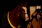 November 4, 2020: Improbable, trained by trainer Bob Baffert, exercises in preparation for the Breeders' Cup Classic at  at Keeneland Racetrack in Lexington, Kentucky on November 4, 2020. Alex Evers/Eclipse Sportswire/Breeders Cup