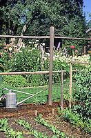 HS18-131z  Vegetable garden