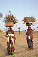 Women gathering firewood in the Thar Desert, which has been suffering from a drought for the last eight years. As the drought continues, firewood and fodder for animals has become increasingly scarce. One of the women is carrying a lamb...