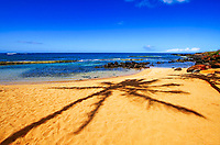 A palm tree casts a shadow on the golden sand beach, with the Pacific Ocean in the background, on Kauai Island in Hawaii