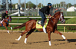 April 23, 2014 Danza gallops at Churchill Downs.  Danza is owned by Eclipse Thoroughbred Partners and trained by Todd Pletcher.  He recently won the Arkansas Derby at Oaklawn Park.