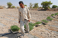 JORDANIEN Wassermangel und Landwirtschaft im Jordan Tal, Gemueseanbau / JORDAN, water shortage and agriculture in the Jordan valley , vegetable cultivation