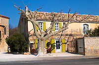 The restaurant Bistrot La Petite France in Le Paradou with a naked tree, Provence, Bouche du Rhone, France