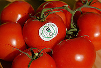 "Europa Deutschland DEU .Bio Label auf Tomaten -  Bio Oeko Lebensmittel Tomate Biotomate Gemuese xagndaz | .Europe Germany GER organic tomato with label  .  -  organic agriculture food .| [ copyright (c) Joerg Boethling / agenda , Veroeffentlichung nur gegen Honorar und Belegexemplar an / publication only with royalties and copy to:  agenda PG   Rothestr. 66   Germany D-22765 Hamburg   ph. ++49 40 391 907 14   e-mail: boethling@agenda-fototext.de   www.agenda-fototext.de   Bank: Hamburger Sparkasse  BLZ 200 505 50  Kto. 1281 120 178   IBAN: DE96 2005 0550 1281 1201 78   BIC: ""HASPDEHH"" ,  WEITERE MOTIVE ZU DIESEM THEMA SIND VORHANDEN!! MORE PICTURES ON THIS SUBJECT AVAILABLE!! ] [#0,26,121#]"