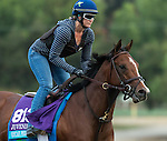 ARCADIA, CA - OCT 31: Oscar Performance, owned by American Racing, LLC and trained by Brian A. Lynch, exercises in preparation for the Breeders' Cup Juvenile Turf at Santa Anita Park on October 31, 2016 in Arcadia, California. (Photo by Casey Phillips/Eclipse Sportswire/Breeders Cup)
