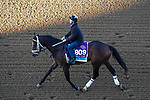 November 4, 2020: Fire At Will, trained by trainer Michael J. Maker, exercises in preparation for the Breeders' Cup Juvenile Turf at Keeneland Racetrack in Lexington, Kentucky on November 4, 2020. John Voorhees/Eclipse Sportswire/Breeders Cup/CSM