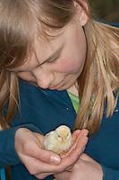 Mädchen, Kind hat frisch geschlüpftes Hühnerküken, Küken auf der Hand