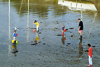 Low tide in the harbour of Sauzon, Belle Ile en Mer, Brittany . People looking for shells in the sludge during the low tide, mud, harbour, harbor, Sauzon, Belle Ile en Mer, island, Brittany, France, West Europe coast, atlantic ocean
