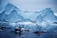 Inuit hunter in Kayak uses harpoon with throwing board to kill a Narwhal, Monodon monoceros, Northwest Greenland, Arctic
