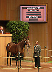 13 September 2010.  Hip #201 Mr. Greeley - Star of Paris filly sold for $675,000 at the Keeneland September Yearling sale.  Consigned by Eaton Sales.