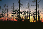 Dead Trees, Richland Balsam, Highest Point on Blue Ridge Parkway, NC