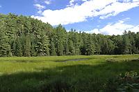 Beaver Meadow Algonquin Park Ontario Canada