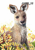 Carlie, REALISTIC ANIMALS, REALISTISCHE TIERE, ANIMALES REALISTICOS, paintings+++++,AUED15,#A#, EVERYDAY,kangaroo ,australian wildlife
