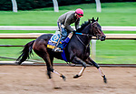 October 30, 2020: Ollie'S Candy, trained by trainer John W. Sadler, exercises in preparation for the Breeders' Cup Distaff at Keeneland Racetrack in Lexington, Kentucky on October 30, 2020. Scott Serio/Eclipse Sportswire/Breeders Cup/CSM