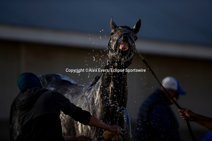 November 4, 2020: Essential Quality gets a bath at Keeneland Racetrack in Lexington, Kentucky on November 4, 2020. Alex Evers/Eclipse Sportswire/Breeders Cup